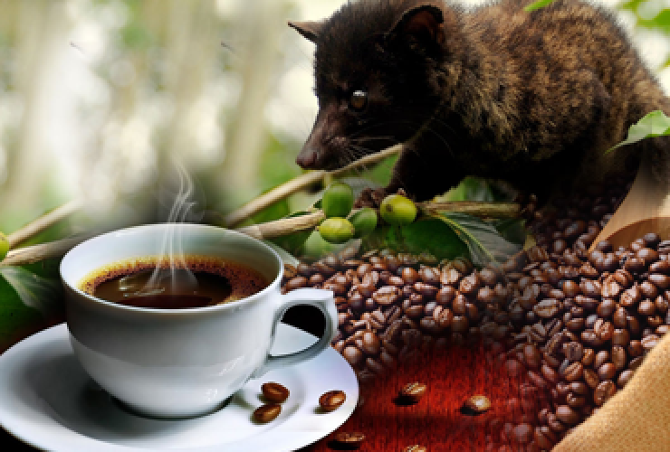 Process of processing Vietnamese weasel coffee